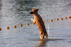 Wake Dog Stock Images