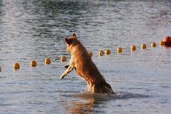Wake Dog Royalty Free Stock Photos