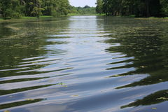 Wake following boat in the Bayou. Royalty Free Stock Photos