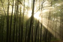 Wake Forest. Photos of the moment of awakening of the deciduous forest royalty free stock image