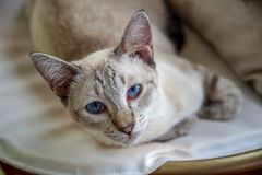 Wake up and look up at the pet cat royalty free stock photo