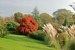 Wakehurst gardens in theuk Stock Photography