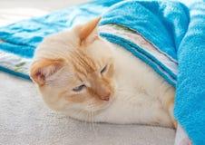 Waking cat Stock Photo