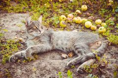 Waking up lazy young cat Royalty Free Stock Images