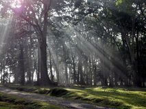 Waking up nature. Sunrise in Kerala National Park Royalty Free Stock Image