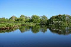 Wakodahatchee-Sumpfgebiete parken lizenzfreies stockbild