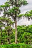 Wakulla fjädrar delstatsparken Arkivbilder