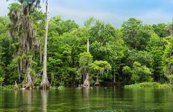 Wakulla fjädrar delstatsparken och floden Royaltyfria Foton