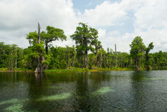 Wakulla Skacze stanu park, Floryda, usa Fotografia Royalty Free