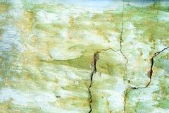 wal的绿色被绘,损坏的表面 免版税库存照片