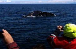 Wal-Aufpassen in Britisch-Kolumbien Lizenzfreie Stockfotografie