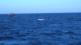 Wal-aufpassender Ausflug in Sri Lanka stock video