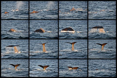 Wal: besprühen Sie und Tauchen stockbild