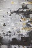 Wal gris resistida Fotografía de archivo libre de regalías