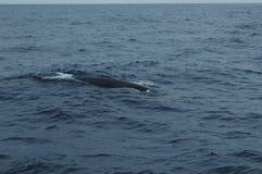 Wal im Azoren-Archipel Lizenzfreie Stockfotos