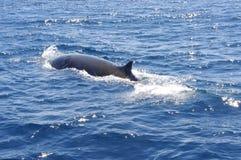 Wal im japanischen Meer Stockfotos