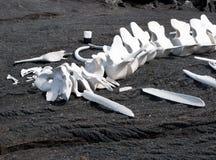 Wal-Knochen auf schwarzem Sand Lizenzfreie Stockfotografie