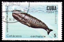 Wal Physeter Catodon, serie Meeressäugetier, circa 1984 Lizenzfreie Stockfotos