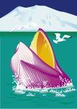 Wal ` s Hauptauftauchen des Wassers Stockbilder