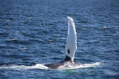 Wal winkt zum Abschied Stockbild