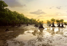 Walakiristrand, Sumba, Indonesië royalty-vrije stock afbeeldingen