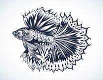 walcząca ryba Obraz Stock