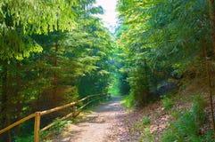 Waldökospur im Koniferenwald stockbilder