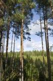 Wald. Lizenzfreie Stockbilder