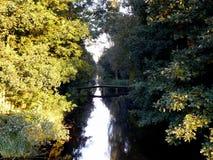 Wald Stockfoto