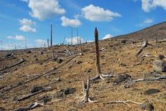 Wald 2008 Lizenzfreie Stockbilder