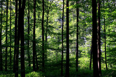 Wald Stockbilder