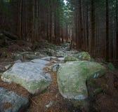 Wald lizenzfreie stockbilder