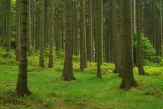 Wald 43 Stockfoto