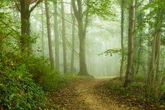 Wald Lizenzfreies Stockbild