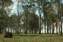 Wald Stockfotografie