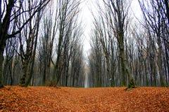 Wald Stockfotos