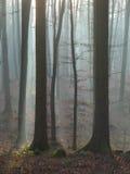 Wald 12 Lizenzfreie Stockbilder