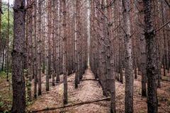 Wald 1 Lizenzfreies Stockfoto
