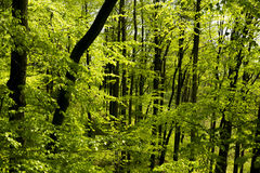 Wald lizenzfreie stockfotografie