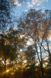 Wald am Abend Lizenzfreie Stockfotografie