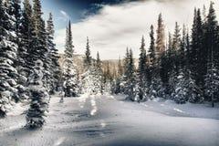 Wald abgedeckt im Schnee stockfotos