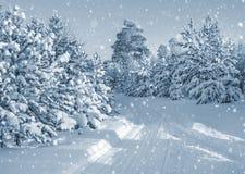 Wald abgedeckt mit Schnee Lizenzfreie Stockbilder