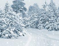 Wald abgedeckt mit Schnee Lizenzfreies Stockbild