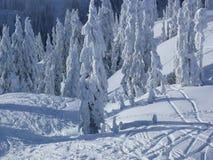 Wald abgedeckt mit Schnee stockfotografie