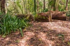 Wald am Aclimacao-Park in Sao Paulo Lizenzfreie Stockbilder
