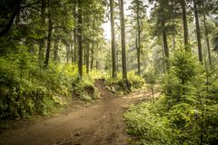 Wald als Hintergrund Natürliche Sommerlandschaft stockfotografie