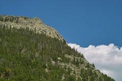 Wald auf Bergabhang Stockfotos