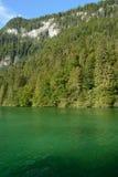 Wald auf Bergabhang am See Stockbild