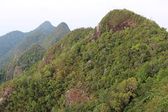 Wald auf dem Berg Lizenzfreies Stockfoto