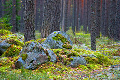 Wald auf dem Felsen Lizenzfreies Stockfoto